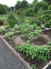 diabetes garden