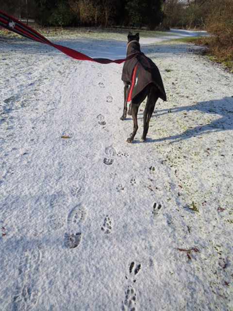 Photo of deer prints on a snowy path in the foreground and a black greyhound dog wearing a dog coat. Dog is on a lead which is being held by the person taking the photo who is out of shot.