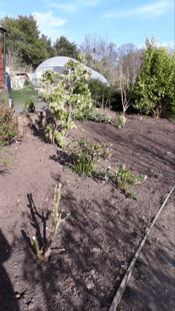 Photo of plant bed with lots of bare earth